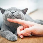 Facts About Cats Health