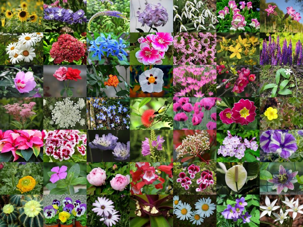 Different kinds of flowers